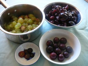 Muscadine grapes, purple and bronze, hulls in one bowl and pulp in a pot with big seeds in a bowl