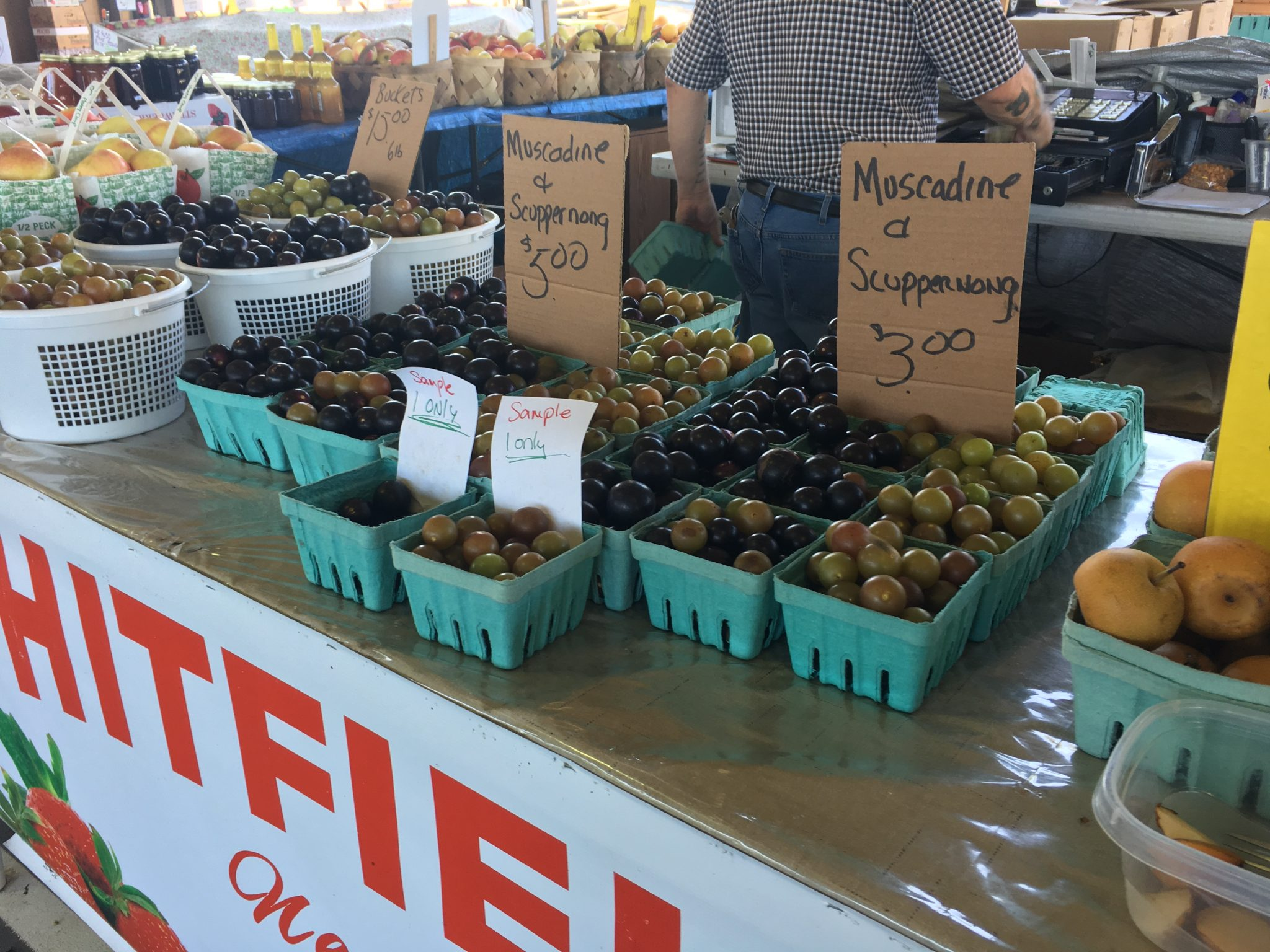 Display of muscadine grapes, both colors, in green cardboard pints and quart boxes with hand printed signs on stand at NC State Farmers Market