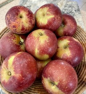 A pile of Arkansas Black apples on a woven basket on a marble counter top; red and gold variegated and speckled apples with stems
